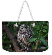 Burrowing Owl Color Version Weekender Tote Bag