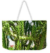 Cactus At Pilgrim Place In Claremont-california  Weekender Tote Bag