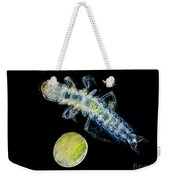 Caddisfly Larvae And Egg, Lm Weekender Tote Bag