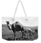 Camel And Young Weekender Tote Bag