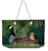 Canada Goose With Goslings Weekender Tote Bag by Alan and Sandy Carey and Photo Researchers