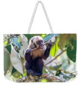 Capuchin Monkey Chewing On A Stick Weekender Tote Bag