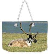 Caribou Resting Weekender Tote Bag