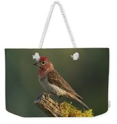 Cassin's Finch Weekender Tote Bag