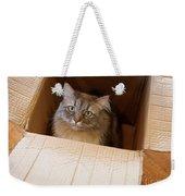 Cat In A Box Weekender Tote Bag