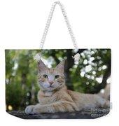 Cat Volterra Italy Weekender Tote Bag