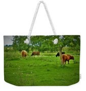 Cattle Grazing In A Lush Pasture Weekender Tote Bag