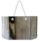 Cautious Kitty Weekender Tote Bag