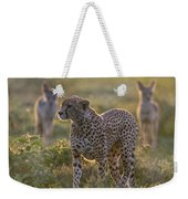 Cheetah Acinonyx Jubatus And Jackals Weekender Tote Bag