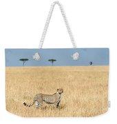 Cheetah Acinonyx Jubatus In Plains Weekender Tote Bag