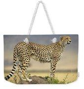 Cheetah Acinonyx Jubatus On Termite Weekender Tote Bag by Winfried Wisniewski