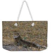 Cheetah At Rest Weekender Tote Bag