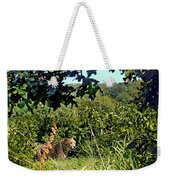 Cheetah Zoo Landscape Weekender Tote Bag