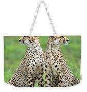 Cheetahs Acinonyx Jubatus In Forest Weekender Tote Bag