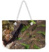 Chelidonura Punctata Nudibranch Weekender Tote Bag