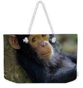 Chimpanzee Pan Troglodytes Baby Leaning Weekender Tote Bag