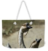 Chinese Geese Anser Cygnoides At Zoo Weekender Tote Bag