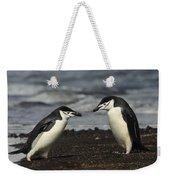 Chinstrap Penguin Duo Weekender Tote Bag