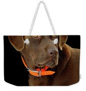 Chocolate Lab Weekender Tote Bag by William Jobes