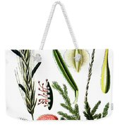 Claviceps Purpures. Recht Wolf's-foot Clubmoss, Stag's- Weekender Tote Bag
