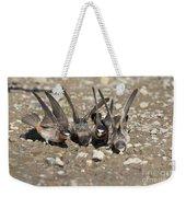 Cliff Swallows Gather Mud Weekender Tote Bag