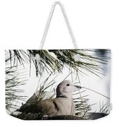 Close Up African Collared Dove Weekender Tote Bag