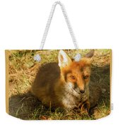 Close-up Of A Fox Resting In A Park Weekender Tote Bag