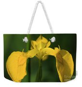 Close Up Of A Yellow Bearded Iris Weekender Tote Bag