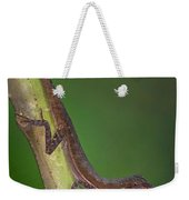 Close-up Of An Anole, Tortuguero, Costa Weekender Tote Bag