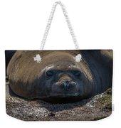 Close-up Of Elephant Seal Looking At Camera Weekender Tote Bag