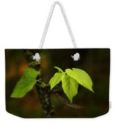 Close Up Of Leaves In Forest Weekender Tote Bag