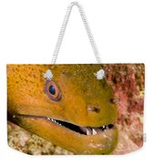 Closeup Of A Giant Moray Eel Weekender Tote Bag
