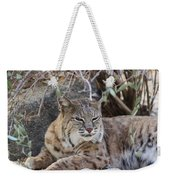 Closeup Of Bobcat Weekender Tote Bag