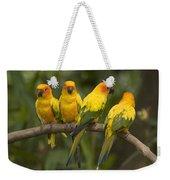 Closeup Of Four Captive Sun Parakeets Weekender Tote Bag