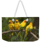Closeup Of Four Captive Sun Parakeets Weekender Tote Bag