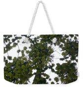 Cloudy Skies Through Maple Weekender Tote Bag