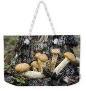 Cluster Of Mushroms In Front Of Stump Weekender Tote Bag