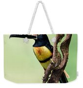 Collared Aracari Pteroglossus Weekender Tote Bag