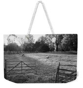 Colonial Sheep In Pasture Weekender Tote Bag