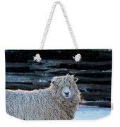 Colonial Sheep In Winter Weekender Tote Bag