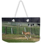 Colt Play With Hay Weekender Tote Bag