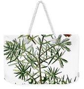 common juniper, Juniperus communis Weekender Tote Bag