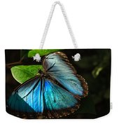 Common Morpho Blue Butterfly Weekender Tote Bag