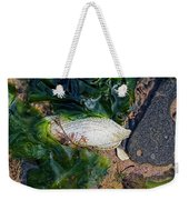 Common Piddock - Pholas Dactylus Weekender Tote Bag