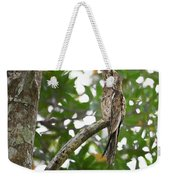 Common Potoo Costa Rica Weekender Tote Bag