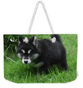 Concern Expressed On The Face Of An Alusky Pup Weekender Tote Bag
