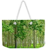 Cottonwood Grove Weekender Tote Bag by Will Borden