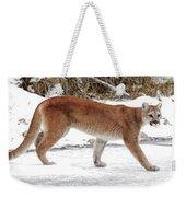 Cougar On The Prowl Weekender Tote Bag