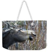 Cow Moose Dining On Willow Weekender Tote Bag