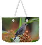 Cowbird Feasting On Milo And Shiloh Military Park In Tennessee Weekender Tote Bag